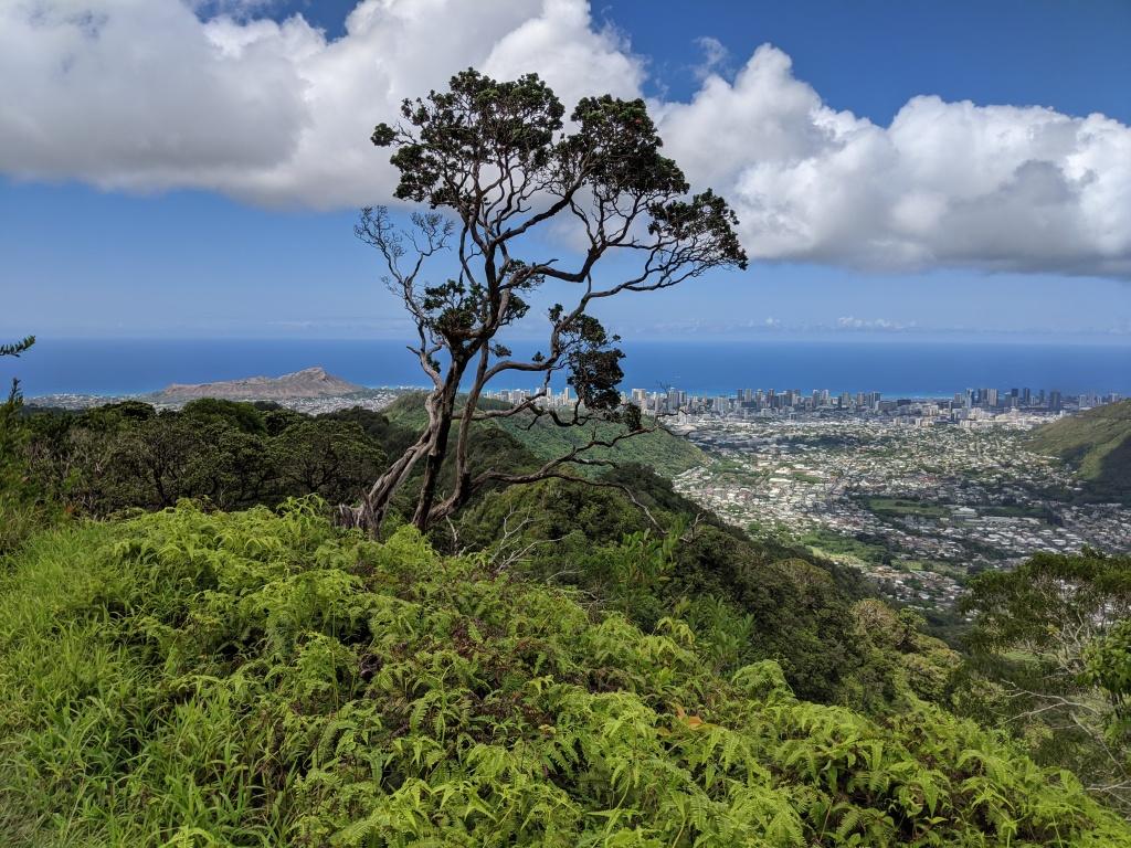 Mount Olympus View